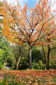 private school, campus, fall, november activities calendar