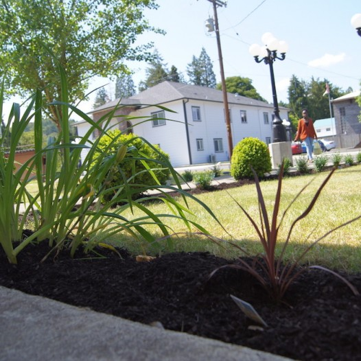 Campus Beautification Continues With Spring Plantings